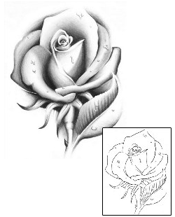 Realistic Rose Tattoo Outline Symbolism In Tattoos And